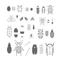 Beetles & Bugs Photopolymer Stamp Set